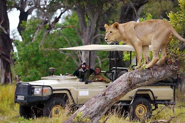 Botswana Specialists